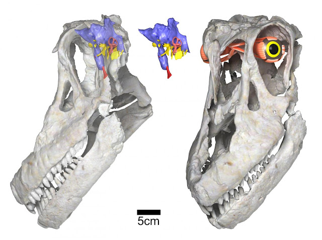 Newly discovered titanosaurian dinosaur from Argentina, Sarmientosaurus