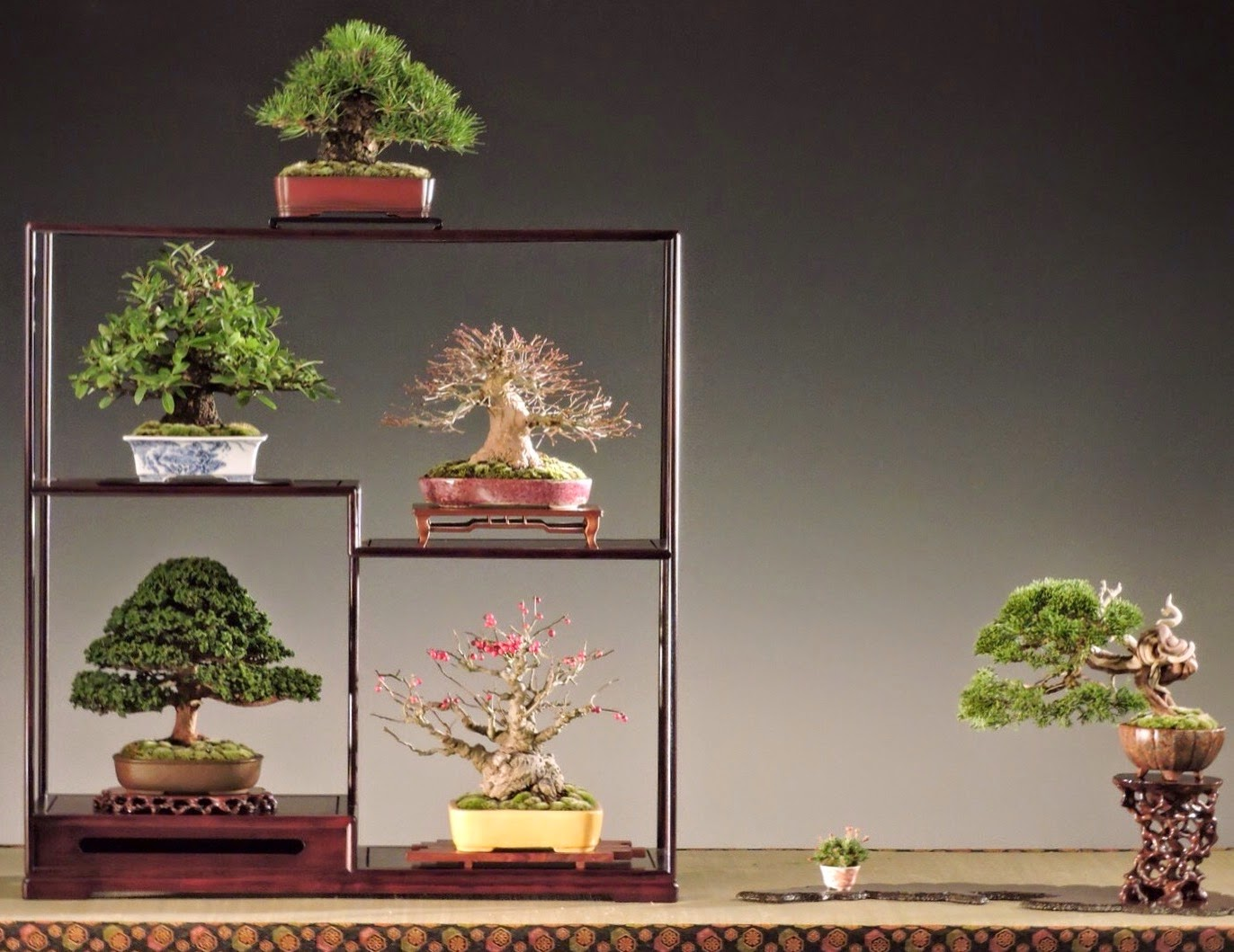 Bespoke Bonsai Stands Gallery