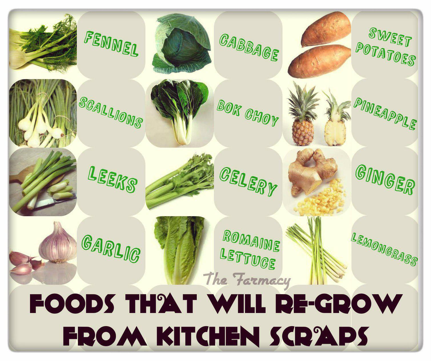 Jalape 241 O Gal S Way Of Living Foods That Will Re Grow From