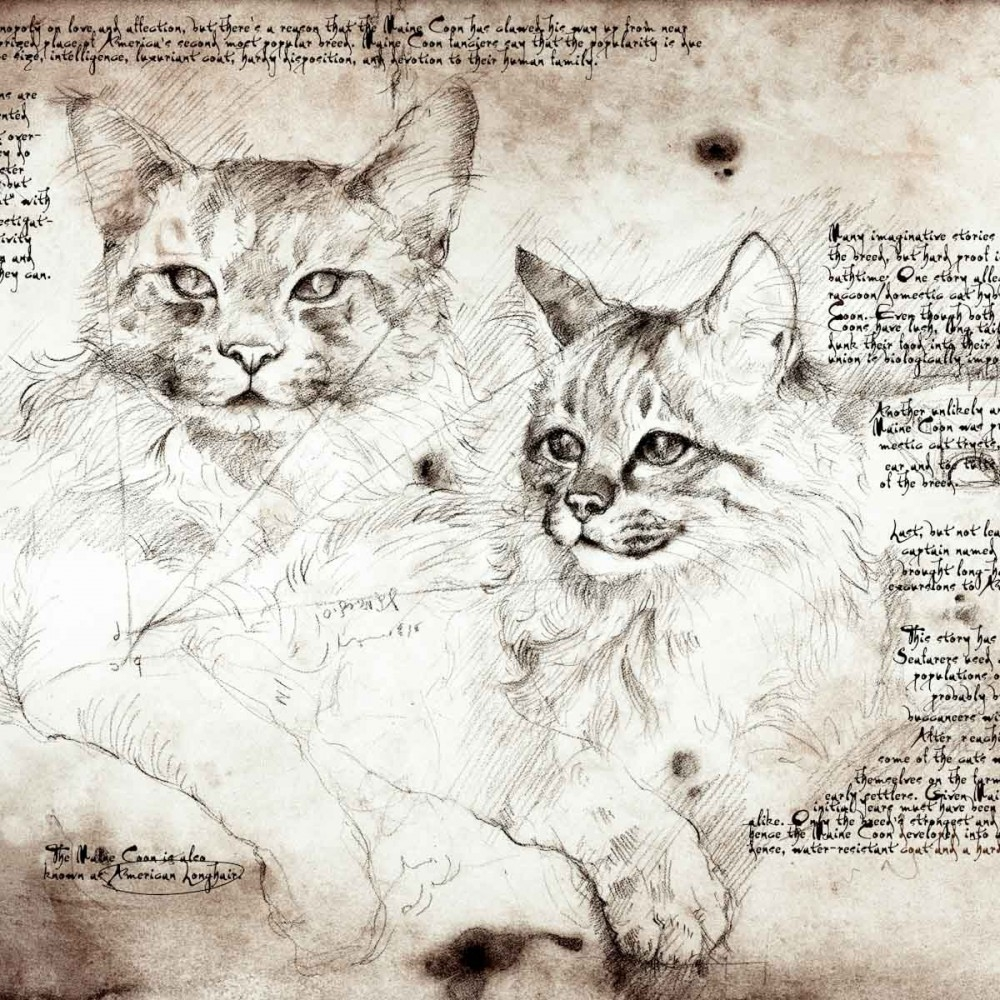 13-Maine-Coon-Study-Leonardo-s-Dogs-Cats-and-Dogs-Drawn-in-the-style-of-Leonardo-da-Vinci
