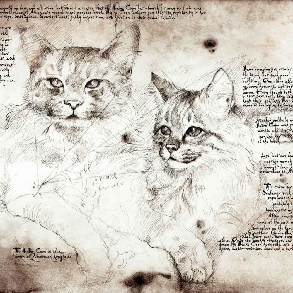 13-Maine-Coon-Study-Leonardo-s-Dogs-Cats-and-Dogs-Drawn-in-the-style-of-Leonardo-da-Vinci