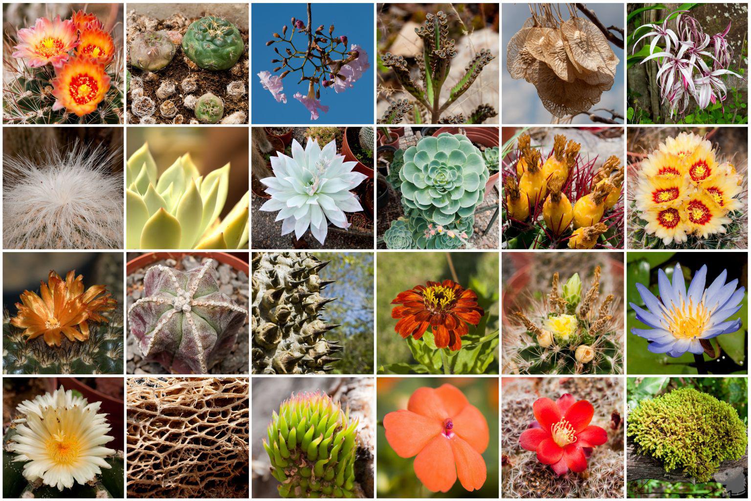 Ribuan Daftar Nama Latin Ilmiah Tumbuhan Tanaman Terlengkap