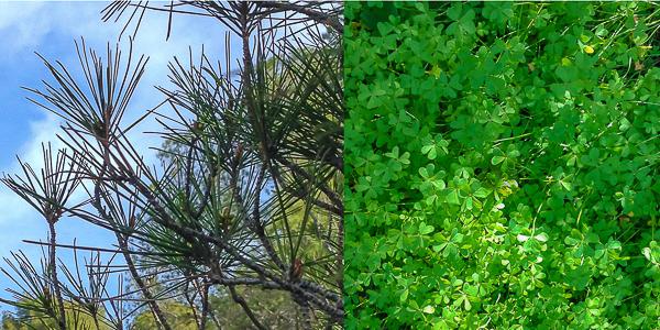 Magdalenas de nata y aceite de oliva