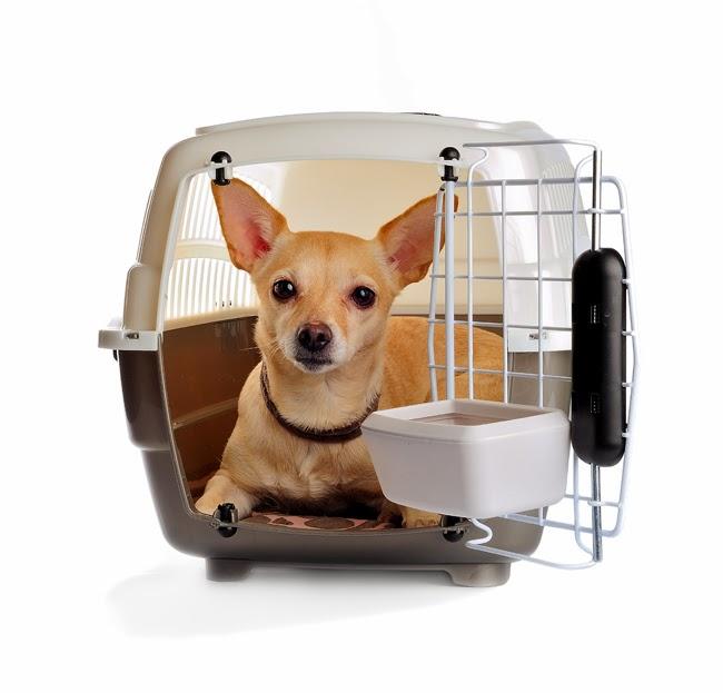 Przyzwyczajanie psa do klatki
