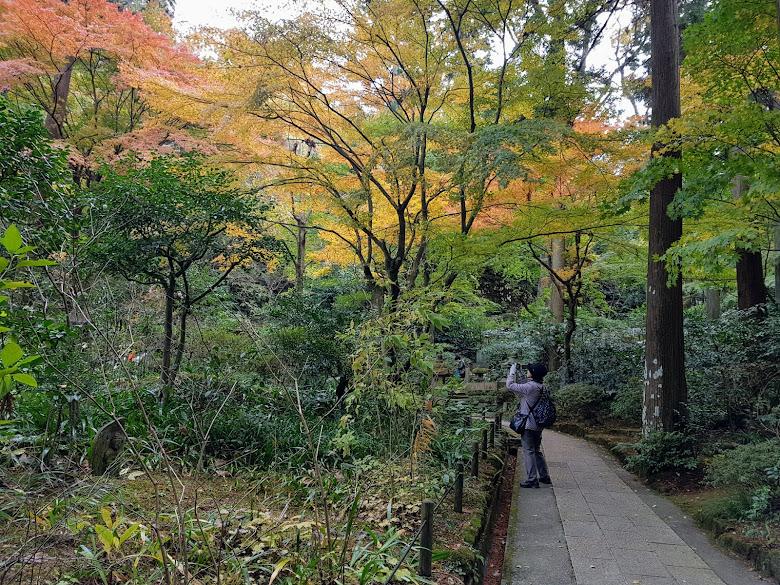寺內的林間步道