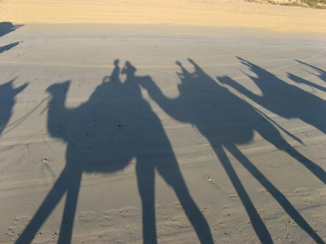 shadows of camels and riders