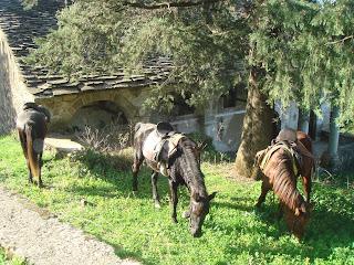 Albania, ratsastusmatka, riitta reissaa