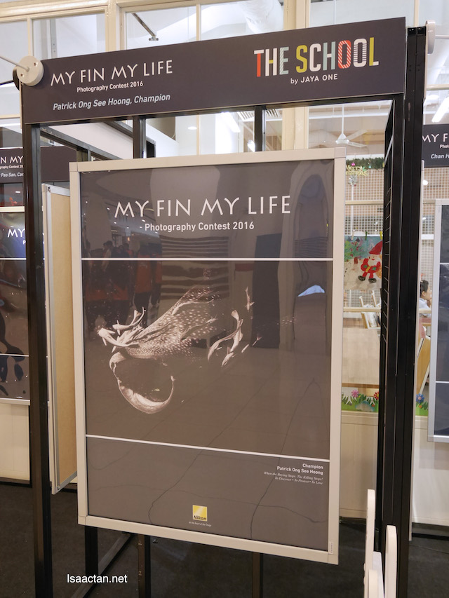 My Fin, My Life Photography Contest Winner