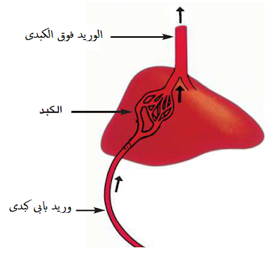 كلود برنار تجربة الكبد المغسول الهرمونات