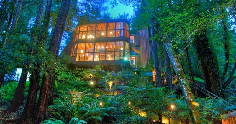 Private Sauna Modern Cabinet: Tree House In The Forest, Mill Valley