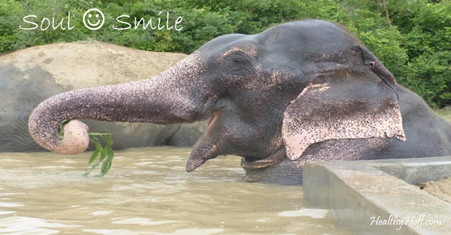 http://expand-your-consciousness.com/elephant-weeps-while-being-rescued-after-50-years-of-confinement/?t=HHL