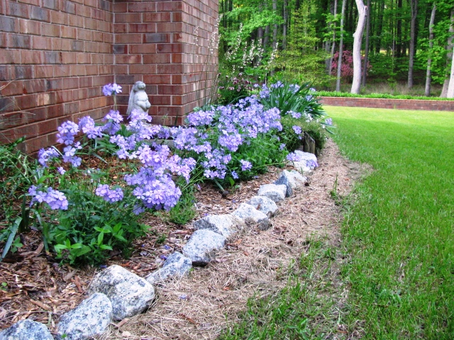 In the Garden: Blue Moon Phlox