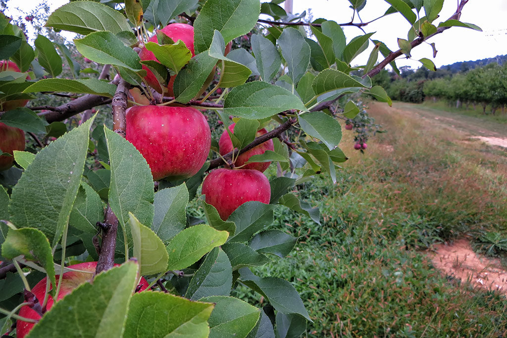 Orchard at the Historic Round Barn