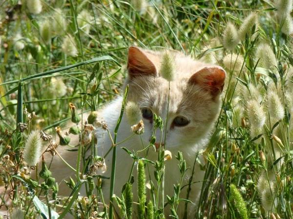 cats in mallorca