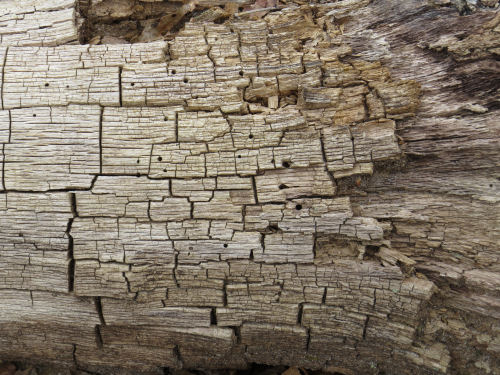 cracked dead wood