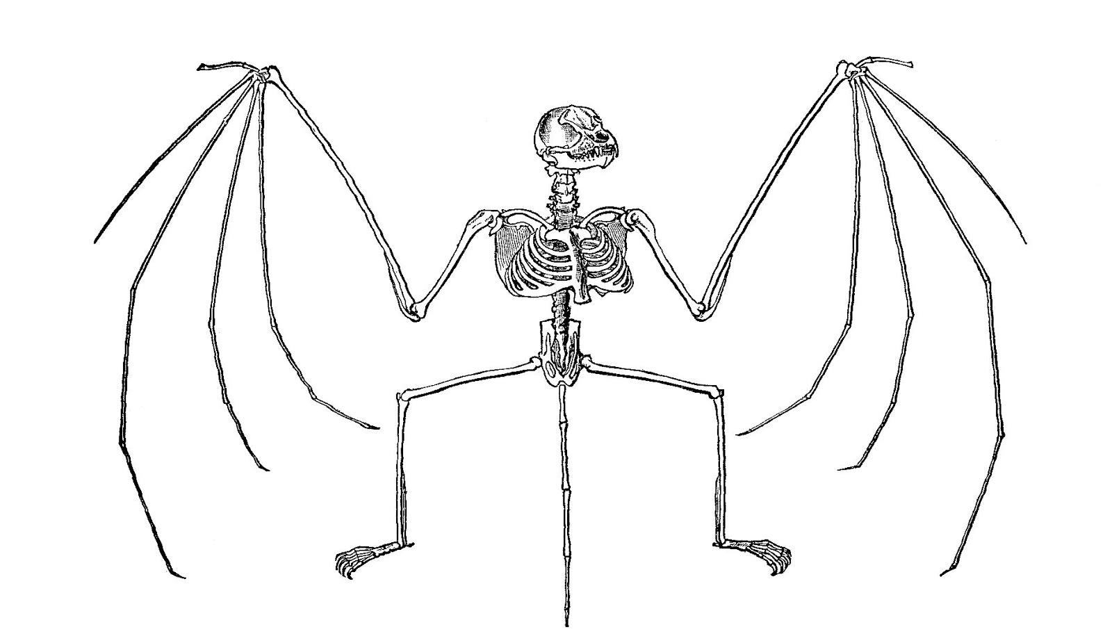Antique Images Free Halloween Clip Art Bat Skeleton