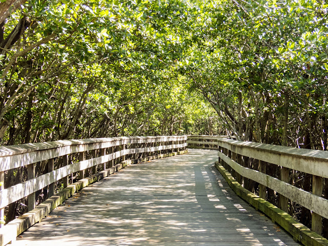 Florida Gulf Coast Travel Destinations: Clam Pass Boardwalk in Naples, Florida