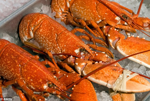 Frozen Lobster Suppliers