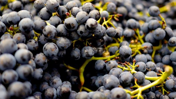 O Óleo de semente de uva ótimo para hidratação de pontas ressecadas