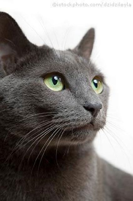 Black And Dogs White Breeds Cats