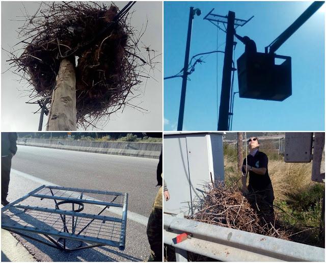 O Φορέας Διαχείρισης Αχέροντα και Καλαμά, επισκεύασε τη φωλιά του πελαργού στην Εγνατία Οδό (+ΦΩΤΟ)