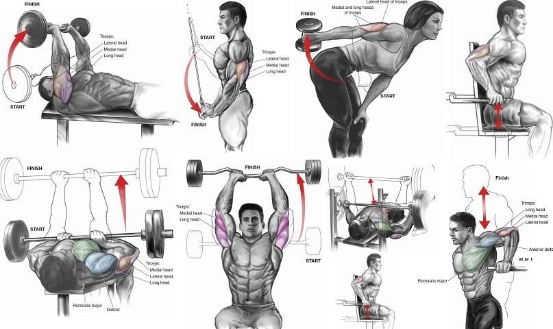 triceps machine workout