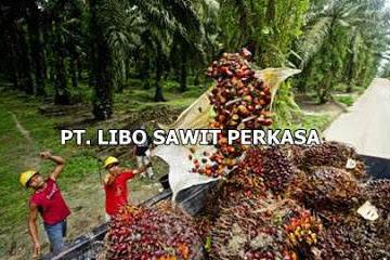 Lowongan PT. Libo Sawit Perkasa Pekanbaru Mei 2019