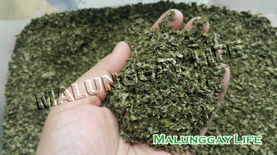 dried-moringa-leaves