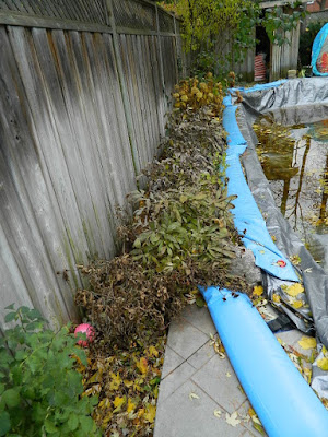 Toronto Fall Cleanup Before in Bedford Park by Paul Jung Gardening Services--a Toronto Organic Gardening Company