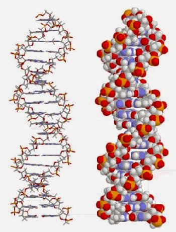 DNA, The Design Code.