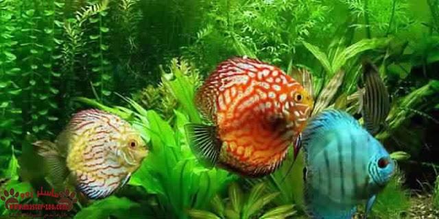 كيفية رعاية أسماك الزينة Care of fish بالصور