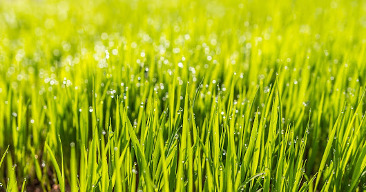 When to Plant a New Lawn