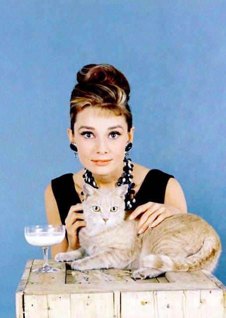 Audrey Hepburn cat gato