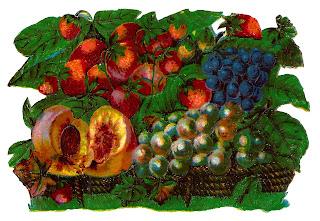 fruit botanical artwork clipart image digital illustration