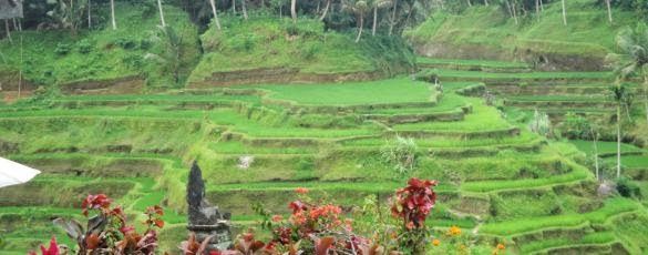 Best Bali Tour Prices - Bali, Holidays, Tours, Sightseeing, Trips, Prices, Costs, Rates, Charges, Fees