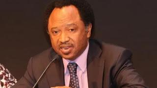 News: Tinubu, Saraki's humiliation will make Buhari's re-election difficult – Shehu Sani
