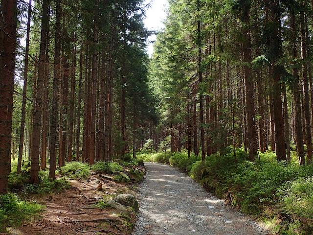 Siedlarska Droga, leśny odcinek