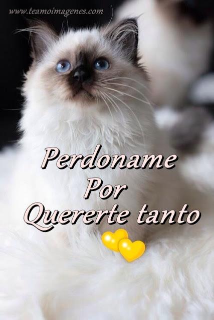 imagen de gatito diciendo perdoname por quererte tanto