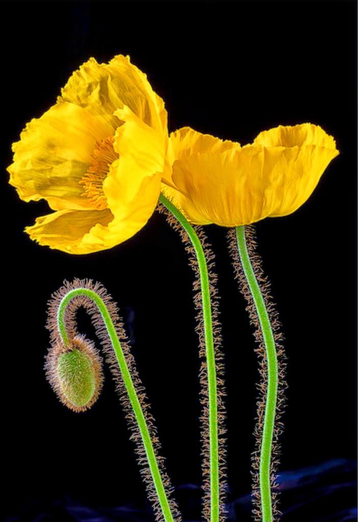 Cuadros modernos pinturas y dibujos mariposas y flores - Cuadros minimalistas modernos lo ultimo arte ...