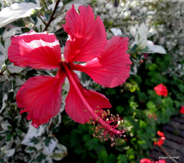 Angazi Plants Flowers South Africa