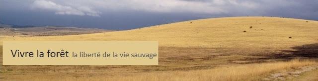 http://vivrelaforet.blogspot.fr/