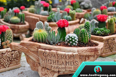 How to Care for Your Cactus Plant