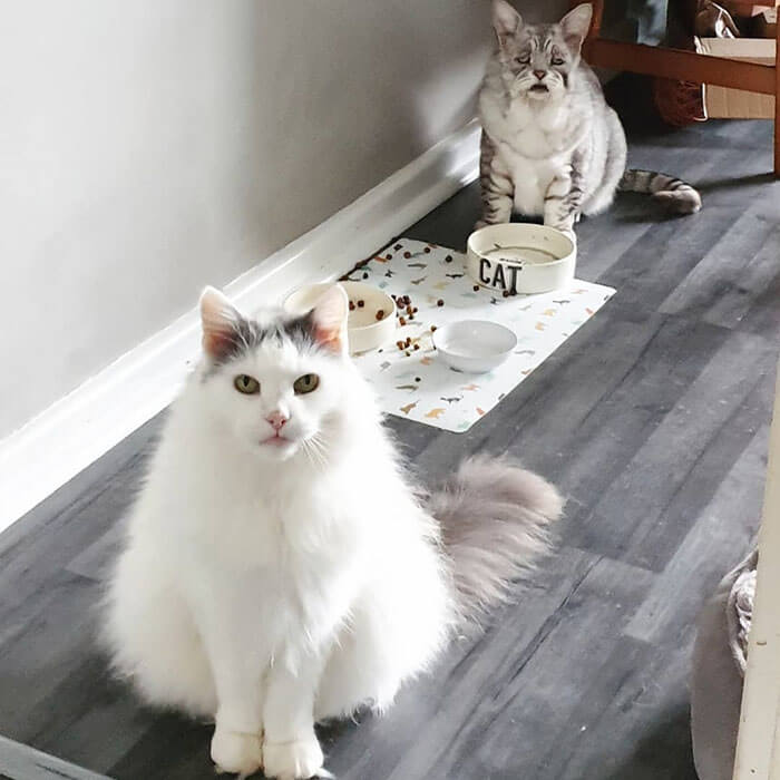 Cat With Ehlers-Danlos Syndrome Finally Found A Home And A Happy Life With His Human Companions