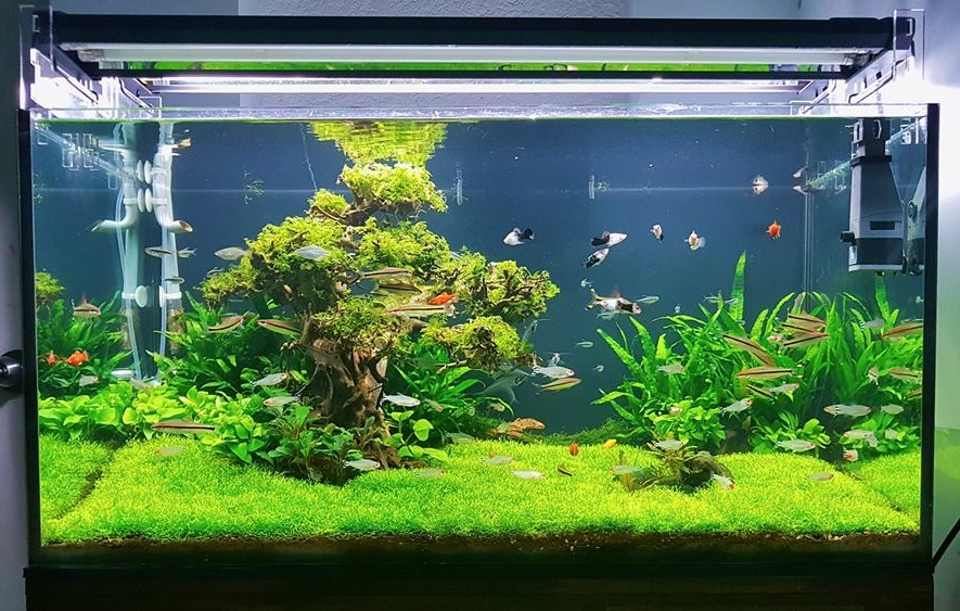 Tạp hóa thủy sinh - Rêu ricca trải full nền làm thảm cỏ rất đẹp