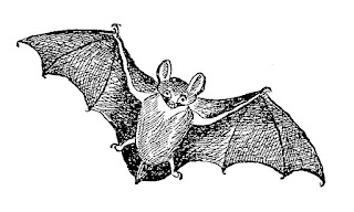 bat animal halloween image digital download
