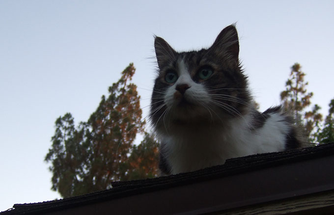 Kiki on the roof