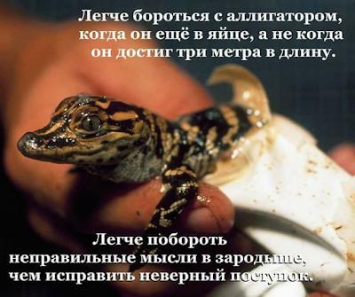 побороть аллигатора