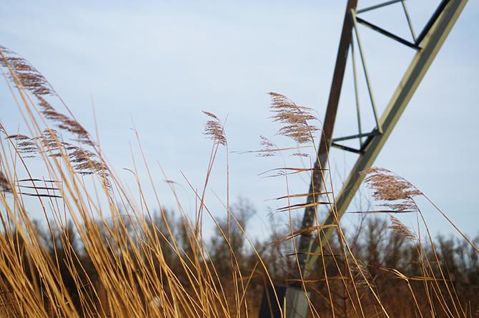 Biesbosch foto's