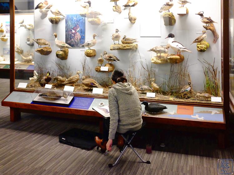 Le Chameau Bleu - Vacances à Chicago - Musée de Chicago
