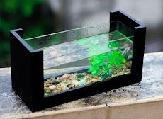 Cara merawat Aquarium bagi pemula (Airnya bersih dan Ikannya sehat)